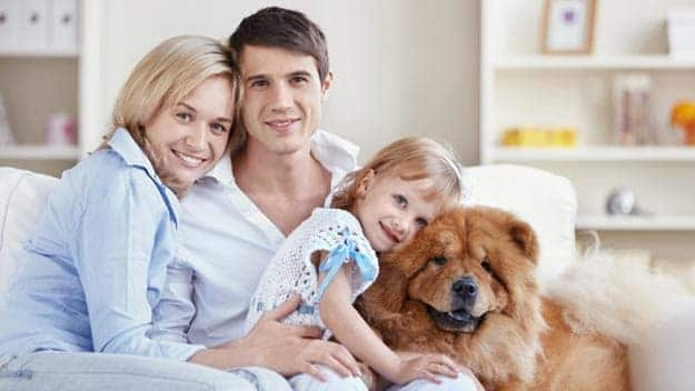 Wills & Trusts dog-young-family Direct Wills Healey